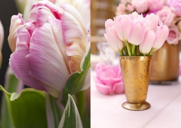 W oczekiwaniu na wiosnę - tulipany